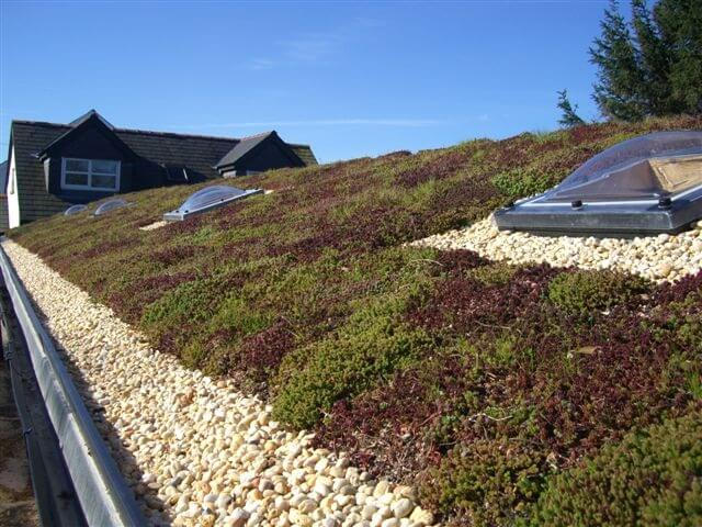 Green roof with skylight Gallery Image