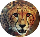 Cheetah Property Management